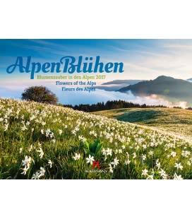 Nástěnný kalendář Alpské květy / Alpenblühen 2017