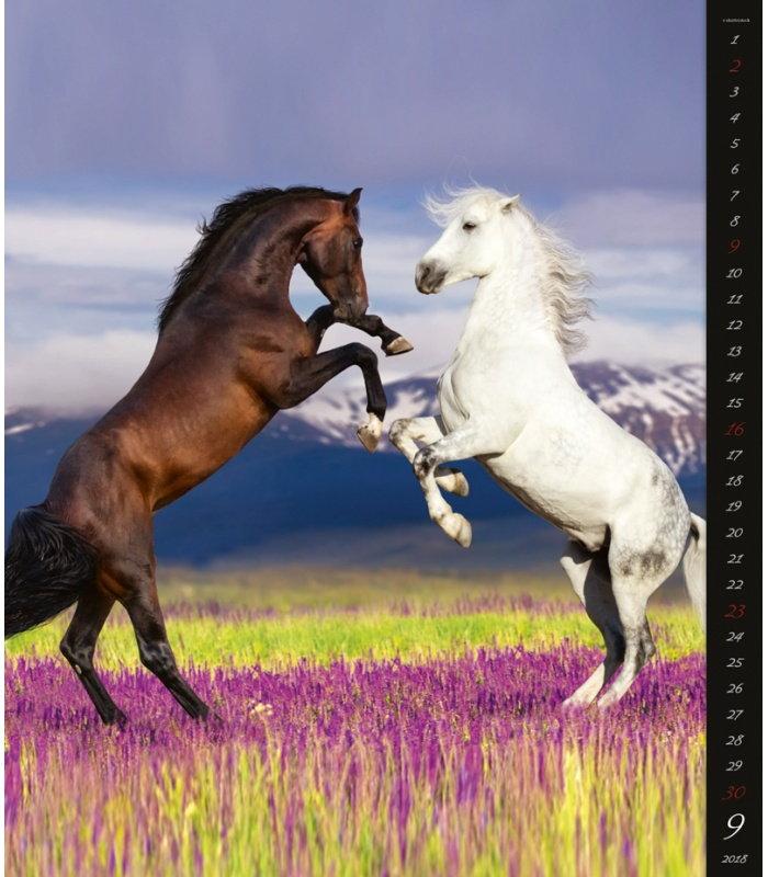 Horses & dreams