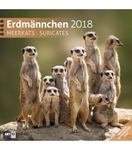 Nástěnný kalendář Surikaty / Erdmännchen 30x30 2018