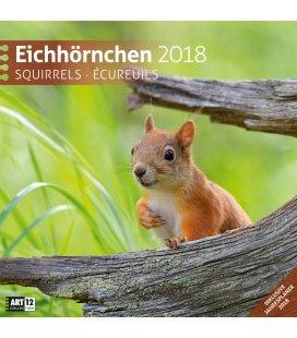 Nástěnný kalendář Veverky / Eichhörnchen 30x30 2018