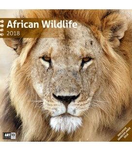 Nástěnný kalendář Africká divočina / African Wildlife 30x30 2018
