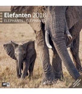 Nástěnný kalendář Sloni / Elefanten 30x30 2018