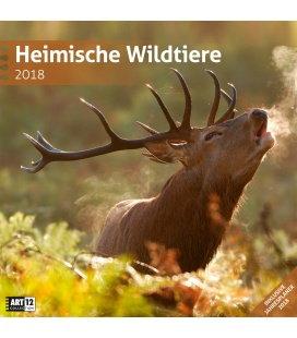 Nástěnný kalendář Zvířata v lese / Heimische Wildtiere 30x30 2018
