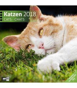 Nástěnný kalendář Kočky / Katzen 30x30 2018