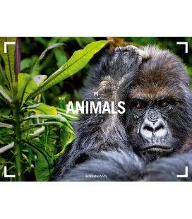 Nástěnný kalendář Zvířata / Animals 2018