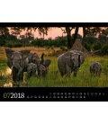 Nástěnný kalendář Fauna Afriky / Tierwelt Afrika 2018