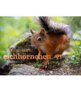 Nástěnný kalendář Veverky / Eichhörnchen 2018