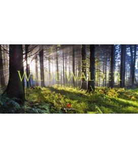 Nástěnný kalendář Divoký les / Wilde Wälder 2018