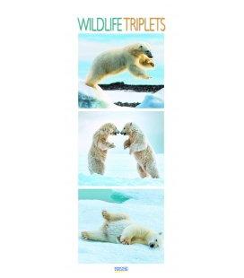 Nástěnný kalendář Zvířata / Wildlife Triplets 2018