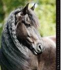 Nástěnný kalendář Horses Dreaming 2019