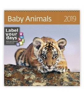 Nástěnný kalendář Baby Animals 2019
