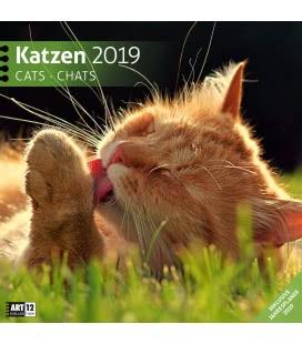 Nástěnný kalendář Kočky / Katzen 2019