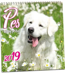 Nástěnný kalendář Pes 2019