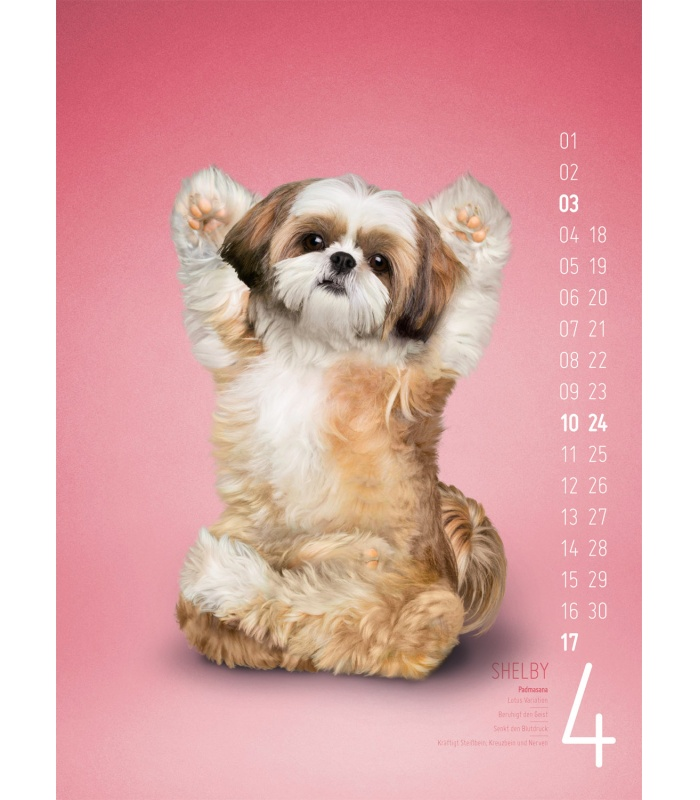 wall calendar yoga dogs 2016