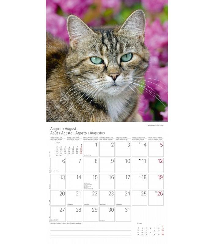 Wandkalender Katzen T&C 2018 Wandkalender Katzen T&C 2018