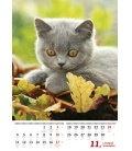 Nástěnný kalendář Kočičky/Mačičky 2019