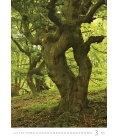 Nástěnný kalendář Trees/Bäume/Stromy 2019