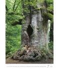 Wall calendar Trees/Bäume/Stromy 2019