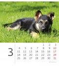 Table calendar Mini Puppies 2019