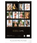 Nástěnný kalendář Girls Exclusive – Martin Šebesta 2019