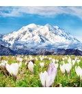 Wall calendar Alps 2019