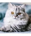 Nástěnný kalendář Kočky 2019