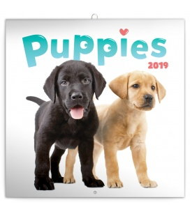 Wall calendar Puppies 2019
