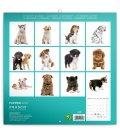 Wall calendar Puppies 2019