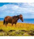 Nástěnný kalendář Koně a moře 2019