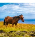 Wall calendar Horses and the Sea 2019