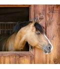 Wall calendar Horses 2019