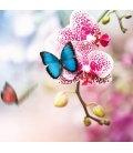 Wall calendar Butterfly 2019