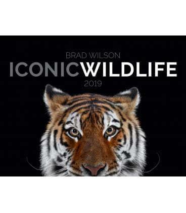 Nástěnný kalendář Ikony divočiny / Iconic Wildlife 2019