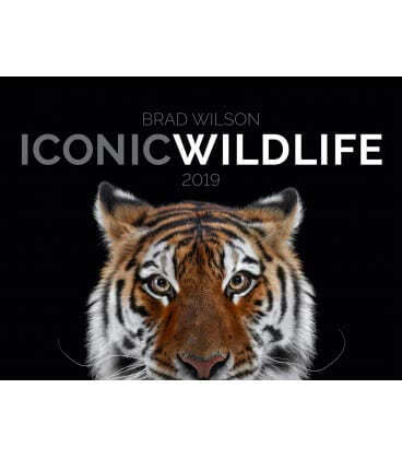 Wall calendar Iconic Wildlife 2019