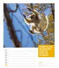 Nástěnný kalendář Zvířata - týdenní plánovač / Tierisch – Wochenplaner 2019