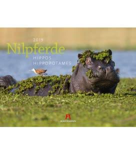 Nástěnný kalendář Hroši / Nilpferde 2019