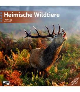 Nástěnný kalendář Zvířata v lese / Heimische Wildtiere 2019