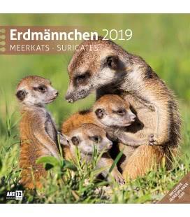 Nástěnný kalendář Surikaty / Erdmännchen 2019
