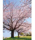 Nástěnný kalendář Stromy - A3 2019