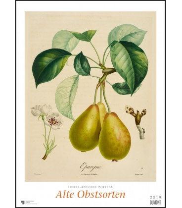 Nástěnný kalendář Ovoce / P.-A. Poiteau: Alte Obstsorten 2019