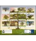 Nástěnný kalendář Kouzlo starých stromů / Vom Zauber alter Bäume 2019