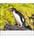 Wall calendar …geliebte Pinguine 2019