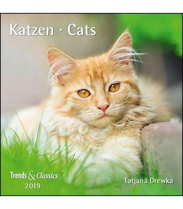 Nástěnný kalendář Kočky / Katzen T&C 2019