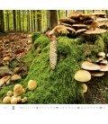Wall calendar Forest/Wald/Les 2020