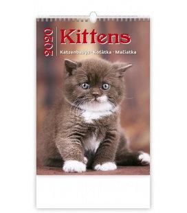 Wall calendar Kittens/Katzenbabys/Koťátka/Mačičky 2020