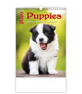 Wall calendar Puppies/Welpen/Štěňátka/Šteniatka 2020