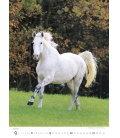Wall calendar Horses/Pferde/Koně/Kone 2020