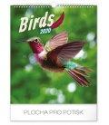 Wall calendar Birds 2020