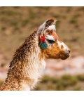 Wall calendar Llamas 2020