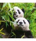 Wall calendar Pandas 2020
